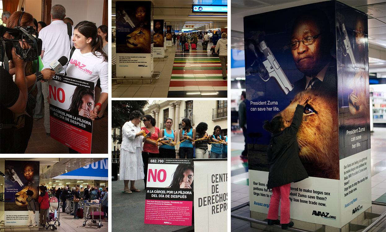 Campagne Lions d'Avaaz, diffusée dans l'aéroport d'Afrique du Sud